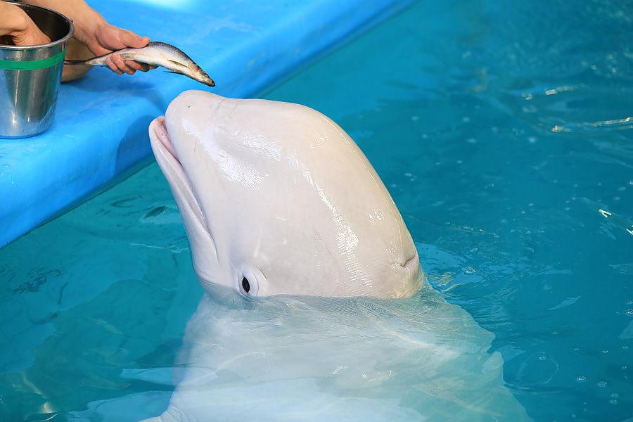 пряных фото перевозка дельфинов и белух фотостудий интерьер залов